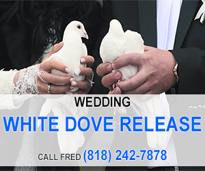 White Dove Release (1 of 2)